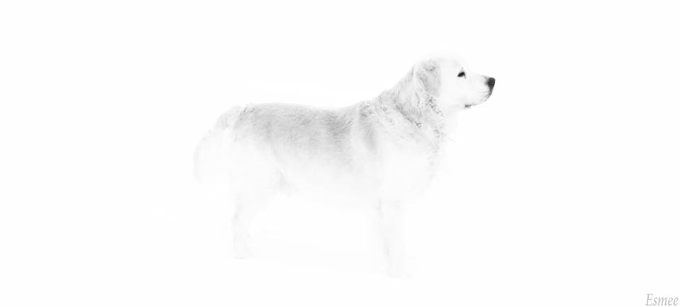 32-twister-in-sneeuw-3de-16-01-13